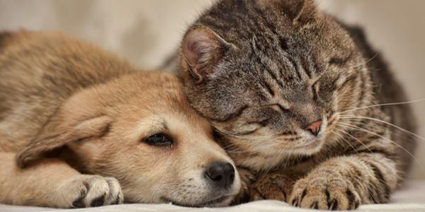 Cani pi intelligenti dei gatti avrebbero il doppio dei for Il linguaggio dei gatti